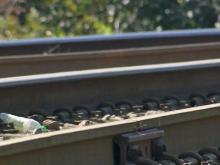 Report: NC not benefitting from railroad profits
