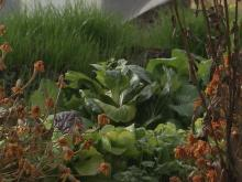 Urban farm blooms in downtown Raleigh