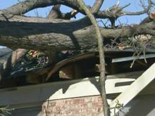Wind blows tree onto Fayetteville house