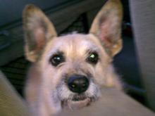 Spirit, a 10-year-old terrier mix, died in an April 19, 2013, house fire on Barclay Drive in southwest Raleigh.