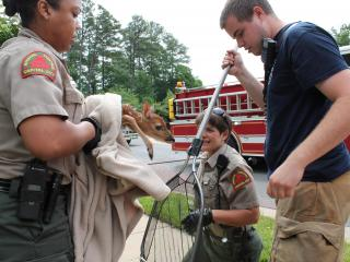 A baby deer was rescued from a storm drain in North Raleigh on Monday.