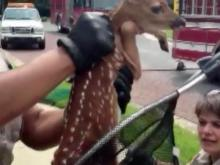 Fawn rescued from Raleigh storm drain