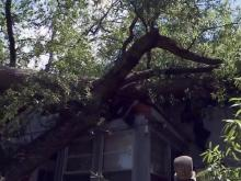 Tree down on Cary home