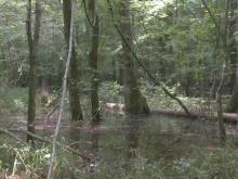 Biologists concerned about flooding along Roanoke River