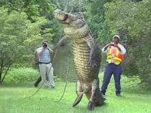Alligator eats dog near Jacksonville shopping center