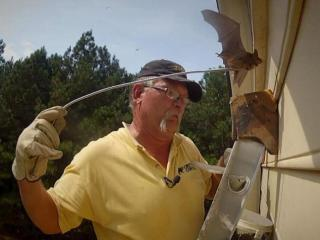For the past 12 years, Al Richards has worked with Critter Control, helping homeowners with bat problems. On Monday, Sept. 9, 2013, he helped Sharon Carstens get them out of her Raleigh house.