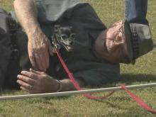 Four-legged athletes strut in Raleigh's Dog Olympics