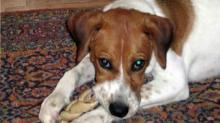 Fayetteville dog killed