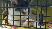 IMAGES: Cat deaths prompt calls for animal shelter director to resign