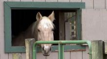 IMAGES: Rare horse virus affecting animals in central NC