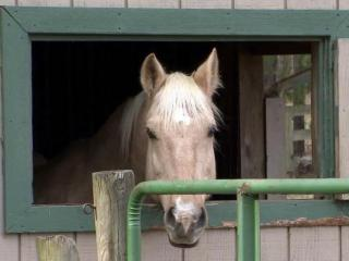 Susan Poulton says she is taking precautions to make sure her 13-year-old horse, Moose, (pictured) does not get Equine Herpesvirus-1.