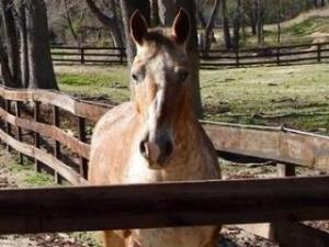 A 15-year-old Apaloosa was found shot to death on Monday in a pasture along Mitchell Mill Road in Zebulon.