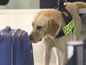 The Raleigh-Durham International Airport announced Friday the addition of TSA canine explosive detection teams to conduct real time threat assessments to improve security.