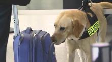 IMAGES: TSA K-9 teams added to boost security at RDU