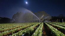 IMAGES: Plunging temperatures put crops at risk