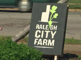 Raleigh City Farm is an urban farm startup that aims to make compost and grow food just blocks from the State Capital.  At Raleigh City Farm, at 800 N. Blount St., volunteers grow kale, carrots, arugula and radishes. The produce is sold to local restaurants.