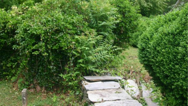 The Old Town Cemetery in Hillsborough is overgrown with vegetation. Photo courtesy of the Alliance for Historic Hillsborough.
