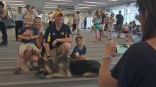 Soldier, service dog reunite
