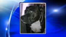 IMAGES: Wayne County woman suffers 'drastic' injuries after dog attack