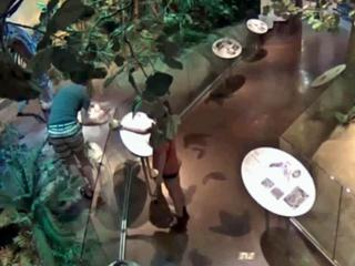 An image from a security video at the North Carolina Museum of Natural Sciences shows a man climbing inside an exhibit on July 14, 2014, to steal a replica of a baby dinosaur valued at $10,000.