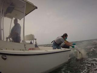 N.C. medical examiner specialist Clyde Gibbs scatters unclaimed remains off the coast of Morehead City on Friday, Aug. 8, 2014, as Marine Patrol enforcement officer Joe Marlette steers the boat.