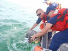 Coast Guard members release a sea turtle that was rescued after becoming ensnared in fishing line in the Oregon Inlet. U.S. Coast Guard photo by Petty Officer 2nd Class Matt Strucic.