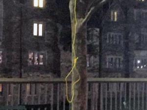Officials at Duke University said an investigation is underway after a noose was found hanging on a tree at the Bryan Center plaza on April 1, 2015. (Source: Facebook)