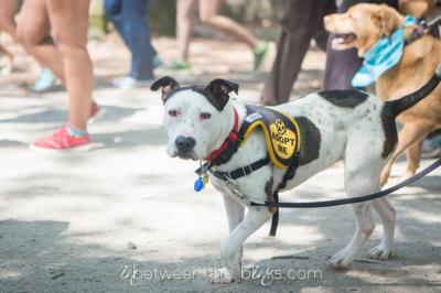 2015 Animal Protection Society Walk for the Animals