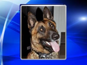 An Apex police K-9 finishing its first full week on the job helped authorities locate a missing woman Friday night after she walked away from her home.