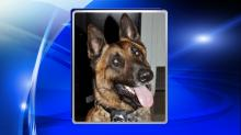 IMAGE: Apex police K-9 helps authorities find missing woman