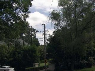 Duke Energy says the 44-fot-tall willow tree on the right needs to be cut down because it interferes with the utility's transmission lines. A Raleigh homeowner says the tree could simply be pruned back and is fighting Duke to prevent its removal.