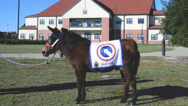 Blackjack served as the mascot for the 1st Sustainment Command at Fort Bragg. Photo courtesy of Fort Bragg.