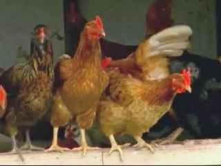 State taking preventative measures to ward off deadly strain of bird flu
