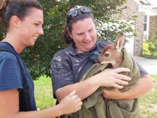 A baby deer was reunited with its mother Friday afternoon after being rescued from a storm drain in Clayton.
