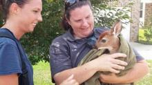 IMAGES: Firefighters rescue frightened fawn from Clayton storm drain