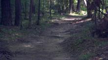 Schenck Forest