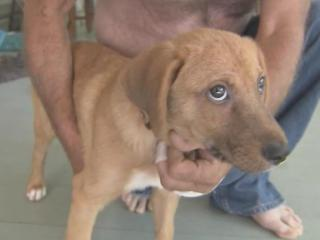 As a Macon man recovers from a rabid dog attack, Warren County Animal Control is urging area pet owners to get their animals vaccinated.