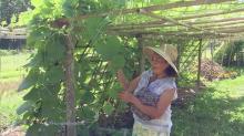 Transplanting Traditions Community Farm