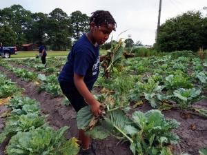 Children who are learning the ins and outs of sustainable living pick vegetables on the 25-acre Conetoe Family Life Center Farm on July 16, 2015.