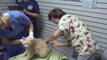 Rescued animals undergoing medical evaluations