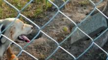 IMAGE: Family cemetery in Wilson being used as dog pen