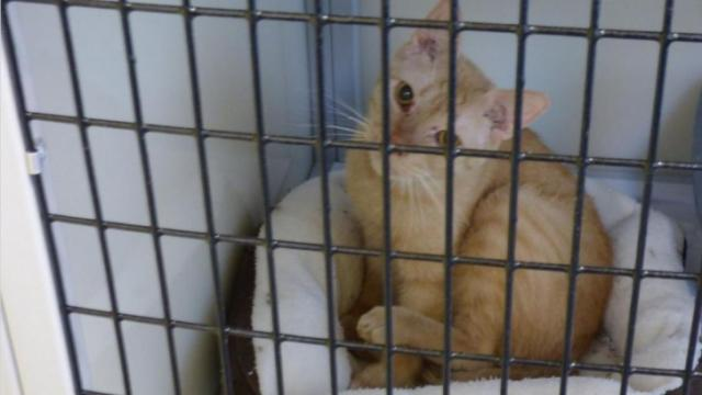 SAFE Haven for Cats is looking for donations for 34 cats who were rescued in an animal hoarding case