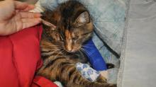 IMAGES: Shelter owner suspicious after cat is shot
