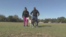Deputy loses job amid dog custody battle