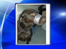 Police: Social media led to animal cruelty charges