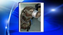 IMAGE: Court appoints attorney for woman charged with animal cruelty