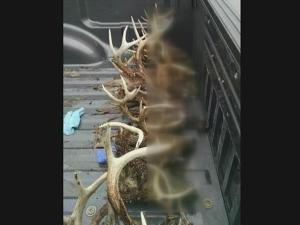 When a tip led wildlife officers to a home in Pinetops Sunday morning, they could not believe what they found - 26 dead deer.