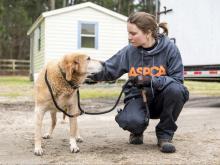 ASPCA helps with Hoke raid