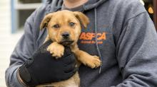 IMAGES: ASPCA officials assist authorities in Hoke County animal shelter raid