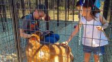 Pet adoptions in Sanford